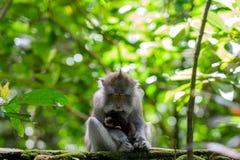 Wilder Affe, der ihr kleines Baby in den Armen halten schläft Stockbild