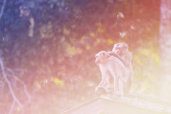 Wilder Affe in der Natur, Bild des hellen Filters der Weinlese Stockbilder