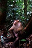 Wilder Affe im Dschungel 3 lizenzfreie stockbilder