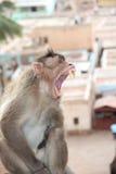 Wilder Affe Indien Stockfotografie