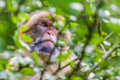 wilder Affe sitzt auf einem Baum Lizenzfreies Stockfoto