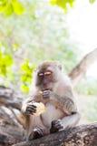 Wilder Affe sitzt auf einem Baum Lizenzfreies Stockbild