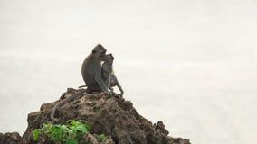 Wilder Affe und Baby im natürlichen Lebensraum Stockbild