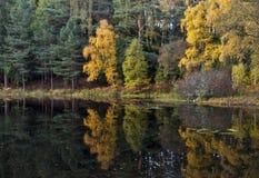 Wilder Autumn Garden spiegelte wider. Stockfotografie