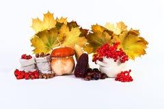 Wilder Autumn Still Life Pumpkin-Kastanienmais nuts Viburnum stieg Lizenzfreie Stockfotos