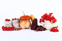 Wilder Autumn Still Life Pumpkin-Kastanienmais nuts Viburnum stieg Stockfotografie