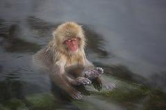 Wilder Baby-Schnee-Affe-Zen in heiße Quellen Stockbild