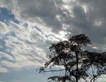 Wilder Baum, der im drastischen Himmel hoch steht Lizenzfreie Stockfotografie