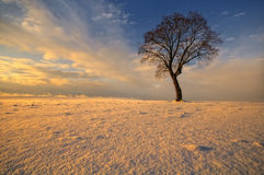 Wilder Baum im Winter an der untergehenden Sonne Lizenzfreies Stockbild