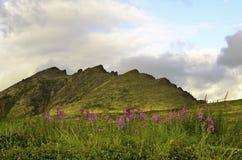 Wilder Bergblick mit Blumen Stockbild