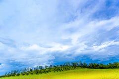 Wilder blauer Himmel über gelben Feldgrünbäumen aller schauen als bunte Landschaft, klare Landschaft Stockbilder
