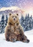 Wilder brauner Bär stockbild