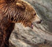 Wilder Eisbär im Moskau-Zoo Lizenzfreies Stockfoto