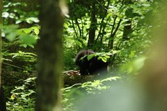 Wilder Eisb?r im Moskau-Zoo lizenzfreies stockbild