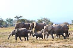 Wilder Elefant stockfotografie