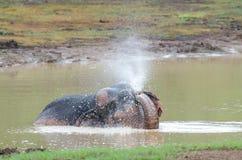 Wilder Elefant, der Wasser spielt Lizenzfreie Stockbilder