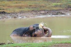 Wilder Elefant, der Wasser spielt Stockfotografie