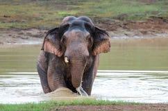 Wilder Elefant, der Wasser spielt Lizenzfreie Stockfotos