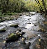 Wilder Fluss Lizenzfreies Stockbild