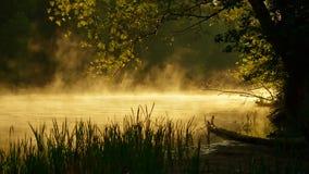 Wilder Fluss Stockfoto