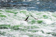 Wilder Fluss betrügt das Fliegen über Flussstromschnellen stockfotos