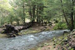 Wilder Fluss, der durch ein forrest schwimmt Stockfoto