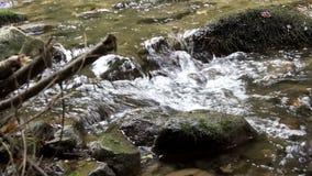 Wilder Fluss, der 4K mit Audio laufen lässt stock footage
