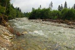 Wilder Fluss des Flussbetts Lizenzfreie Stockbilder