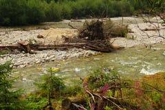 Wilder Fluss des Flussbetts Lizenzfreies Stockbild