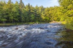 Wilder Fluss im Wald Lizenzfreies Stockbild