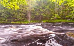 Wilder Fluss im Wald Lizenzfreie Stockbilder