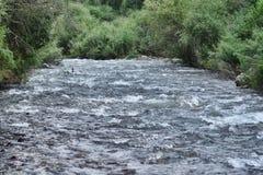 Wilder Fluss mit Bäumen auf dem Ufer Stockbild