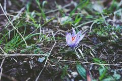 Wilder Forest Flower Closeup Lizenzfreies Stockfoto