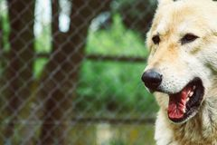 Wilder gähnender Hund stockbilder