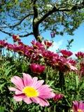 Wilder Garten Stockbilder
