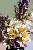 Wilder Gänseblümchenblumenstrauß Lizenzfreies Stockfoto