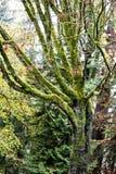 Wilder grüner Baum Lizenzfreies Stockfoto