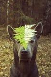 Wilder Hund im Wald Lizenzfreie Stockfotografie
