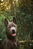 Wilder Hund im Wald Lizenzfreie Stockbilder