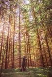 Wilder Hund im Wald Stockbilder