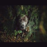 Wilder Hund im Wald Lizenzfreies Stockbild