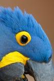 Wilder Hyacinth Macaw-Abschluss oben Stockbild