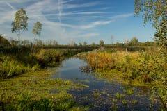 wilder jezioro Obraz Stock
