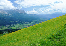 Wilder Kaiser. Seen in the alps of Austria: A blooming meadow with The Wilder Kaiser mountains in the background royalty free stock photography