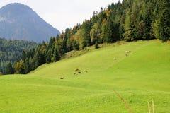 Wilder kaiser mountain in austria Royalty Free Stock Images