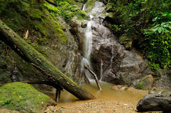Wilder kolumbianischer Darien Dschungel Stockfotos