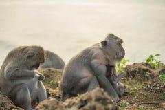 Wilder Lebensraum der Affefamilienmutterbaby-wild lebenden Tiere Lizenzfreies Stockfoto