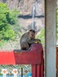 wilder małp Fotografia Royalty Free