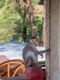 wilder małp Zdjęcia Royalty Free