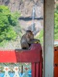 wilder małp Fotografia Stock
